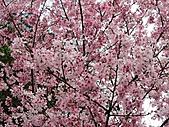 陽明山、竹子湖賞花行:IMG_3024.jpg