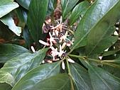 植物隨拍:IMG_4410.jpg