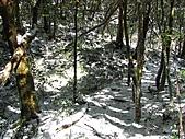 雪蓋復興尖、冰封塔曼山:IMG_2469.jpg