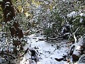 雪蓋復興尖、冰封塔曼山:IMG_2554.jpg