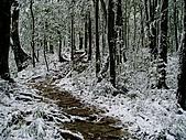 北插雪景:P3050068