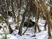 雪蓋復興尖、冰封塔曼山:IMG_2491.jpg